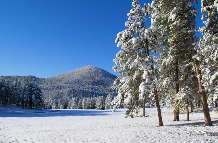 Winter Black hills Snow